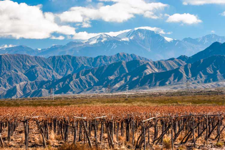 Mendoza, Argentina. Volcano, Aconcagua and Vineyard in background