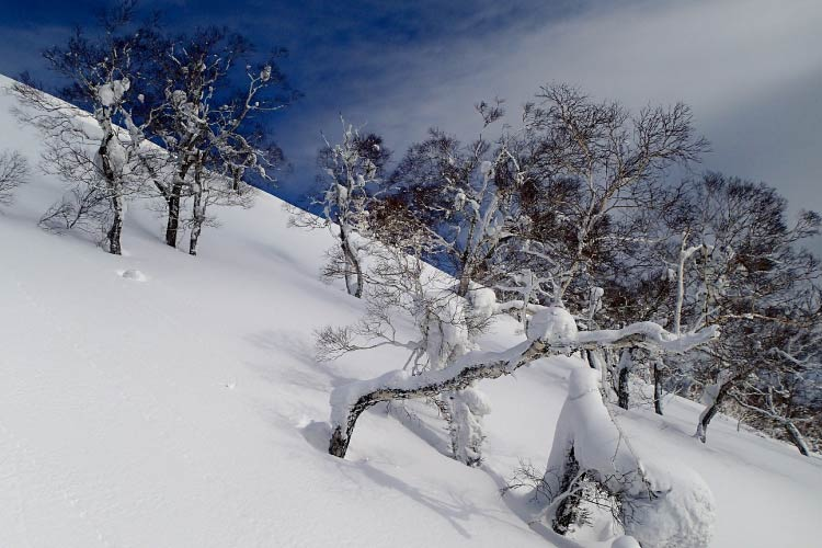 Deep powder in the trees in Niseko, Japan