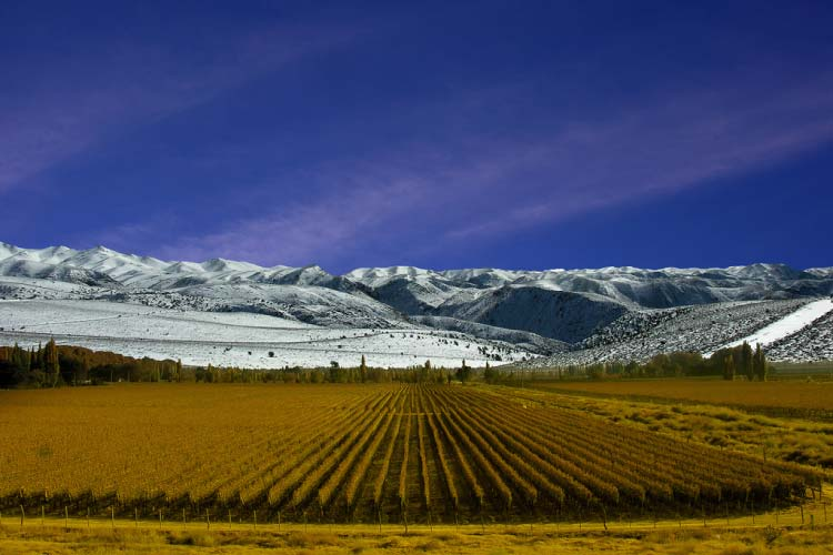 Mendoza wine tours with mountains in background
