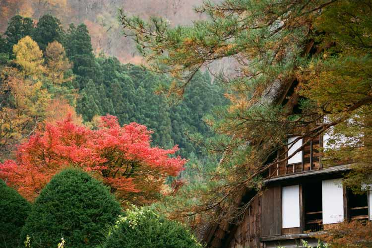 The Wada House, Shirakawa-go