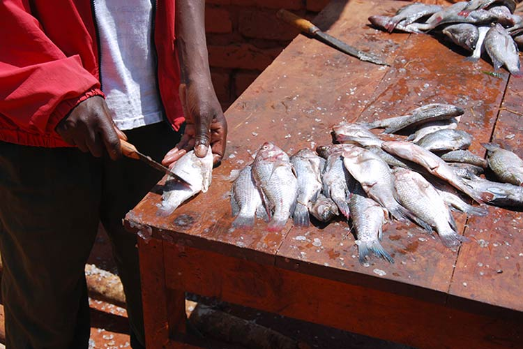 Fish at Market in Cental Africa