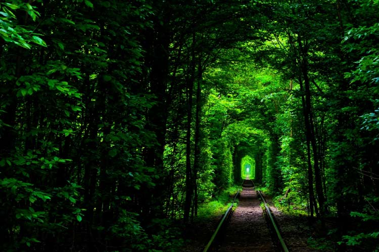 Tunel of Love, Klevan, Ukraine