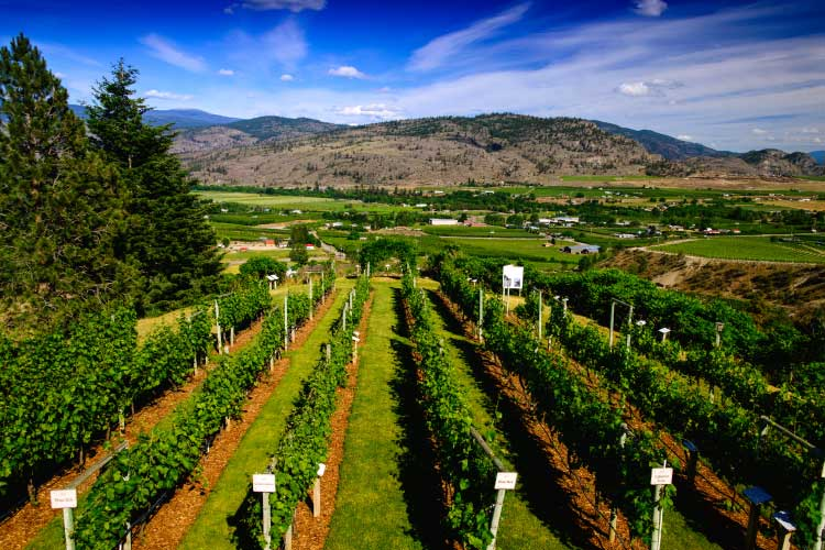 Okanagan Vineyard, BC, one of the best wine regions in the world