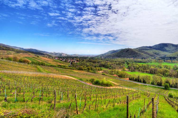 Valley of Munster, Walbach, Alsace