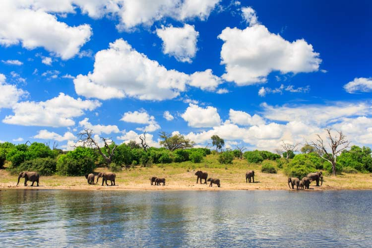 Elephants on the Zambizi