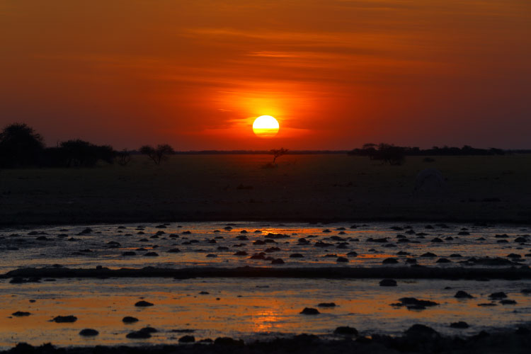 Sunset at the waterhole, Botswana