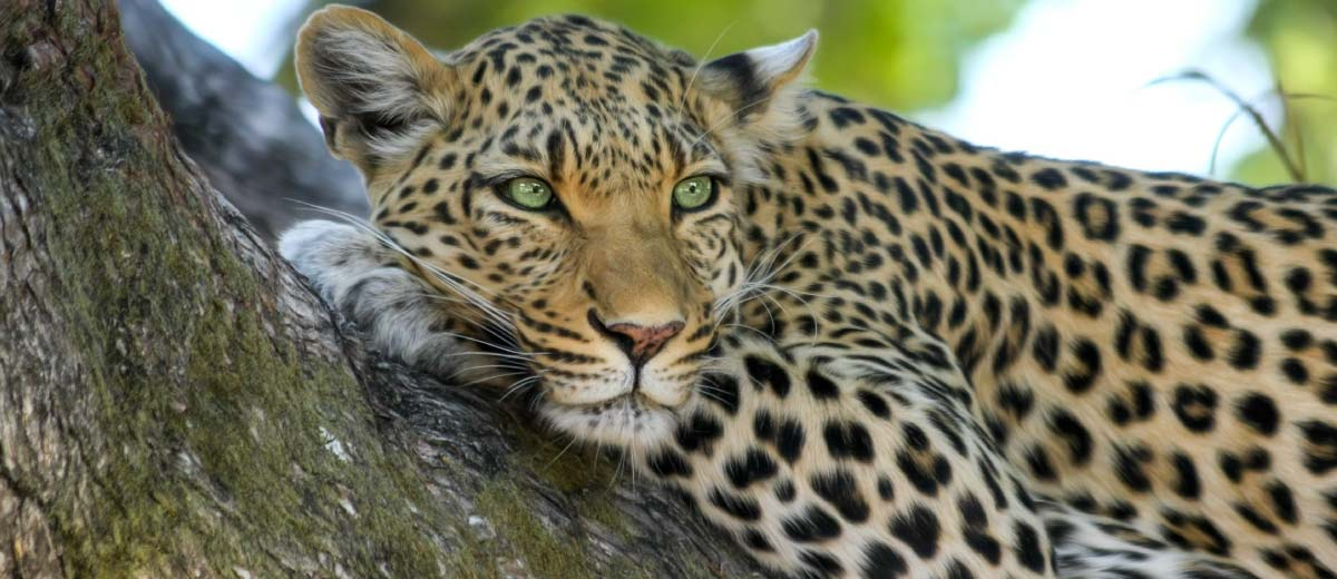 The Big 5 Cats and where to find them