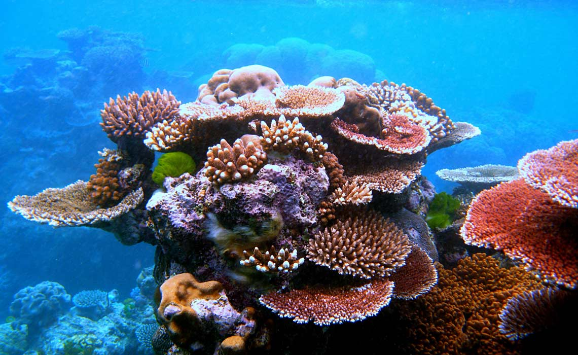 A variety of colourful corals on Flynn Reef near Cairns
