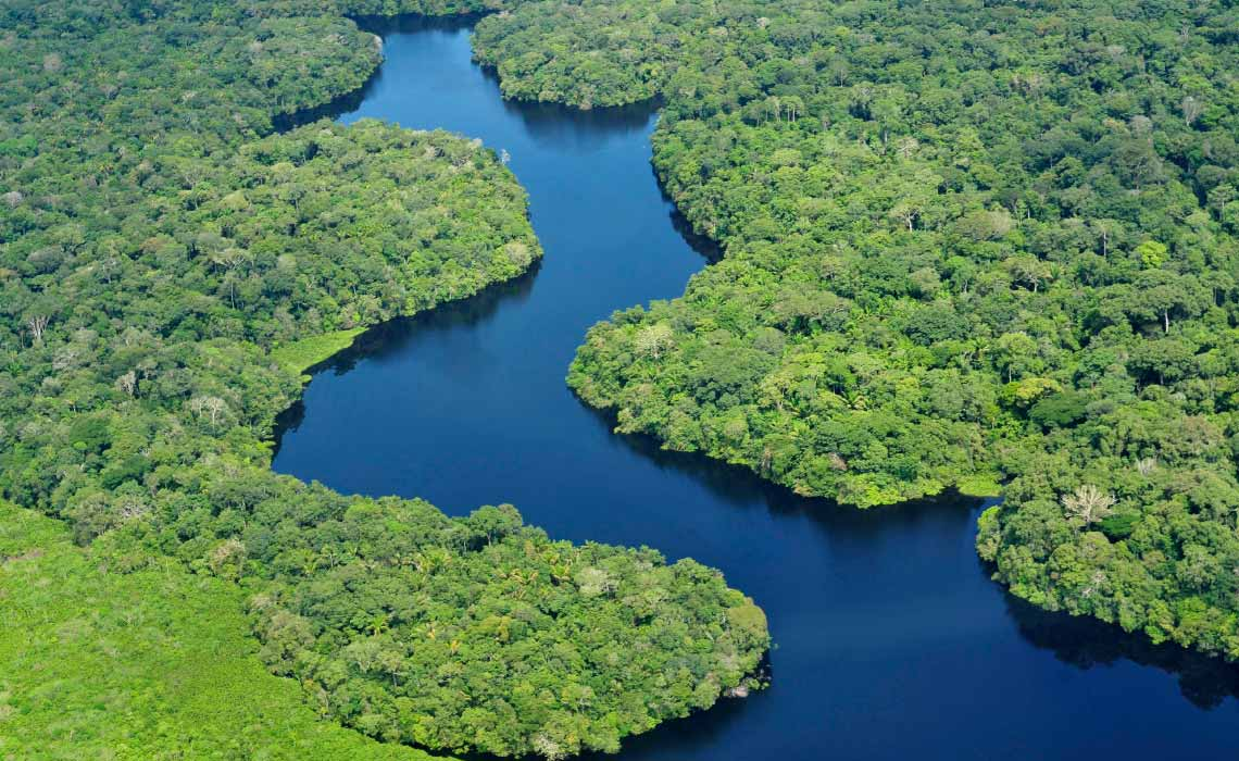 Amazon Rainforest, near Manaus, the capital of the Brazilian state of Amazonas