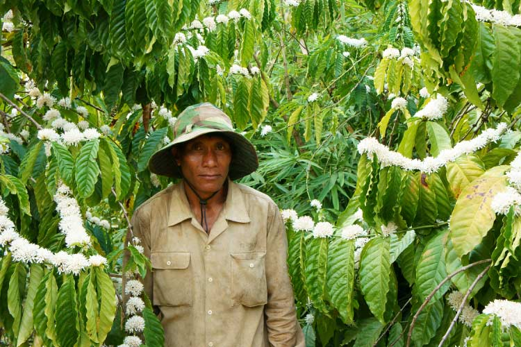 Farmer on a coffee plantation in Daklak, Vietnam