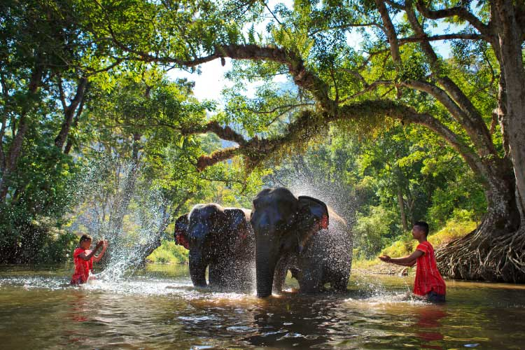Elephant Bathing in Sangkhlaburi, Kanjanaburi