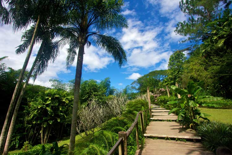 Garden of the Sleeping Giant, Fiji