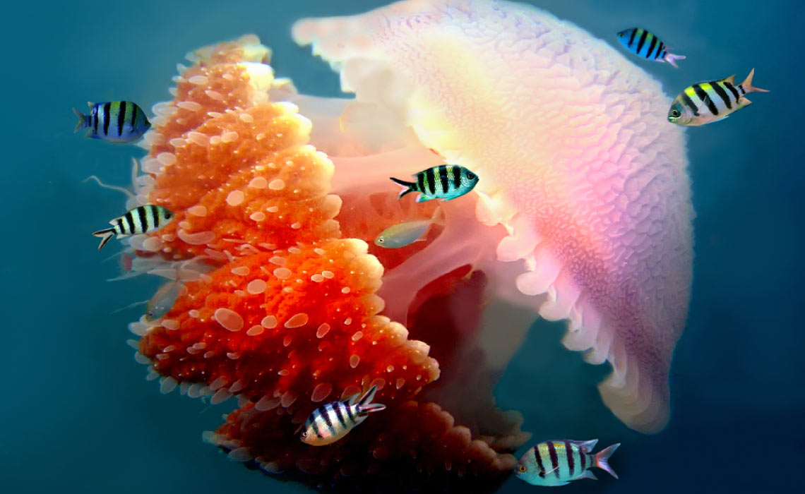 Jelly Fish on the Great Barrier Reef