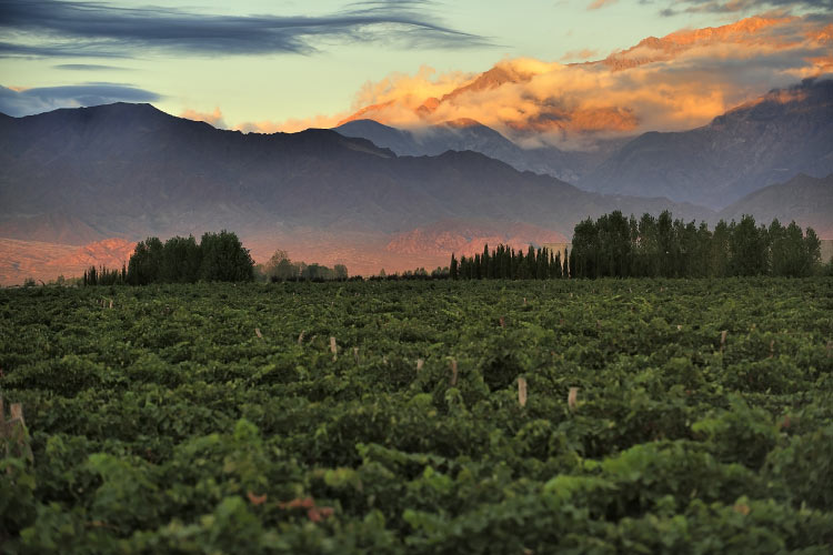 Snow Capped Mountains of the Andes in Mendoza, Argentina