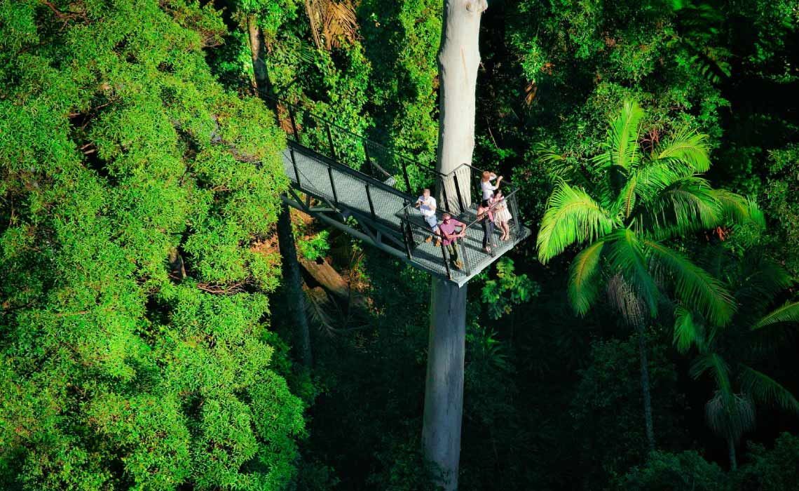Tamborine Mountain Rainforest Skywalk, Gold Coast, Australia