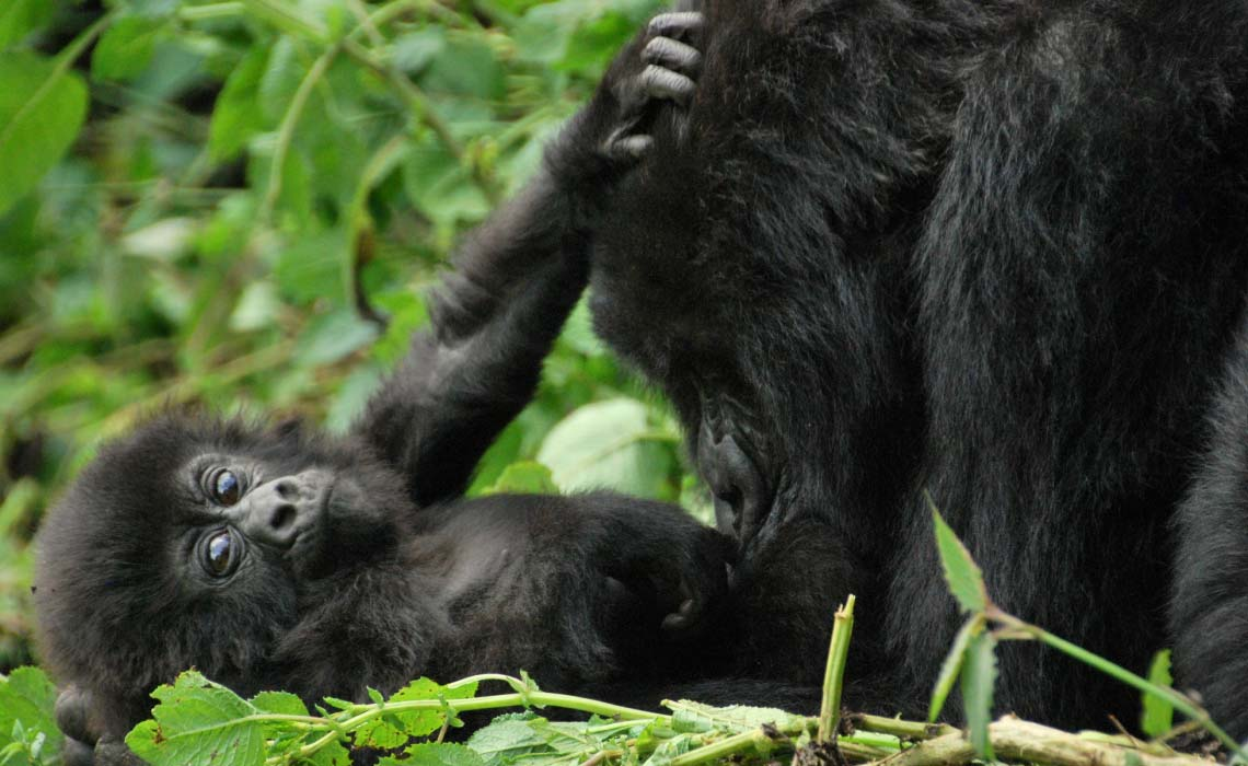 Mother and baby in Volcanoes National Park, Rwanda