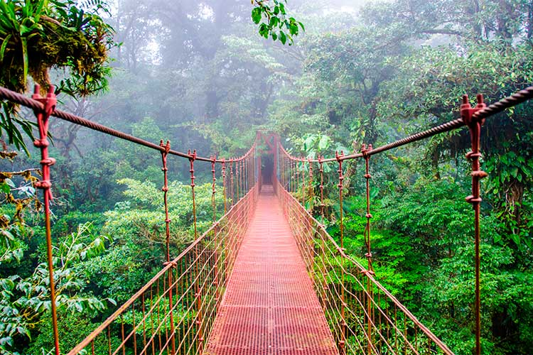 Bridge in Rainforest in Monteverde, Costa Rica