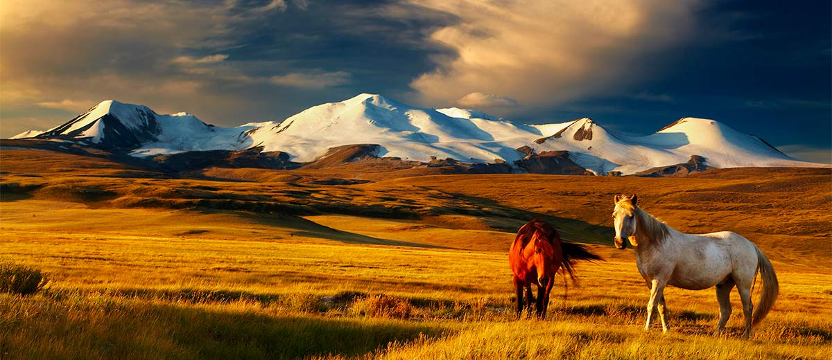 Grazing horses at sunset on the Ukok Plateau