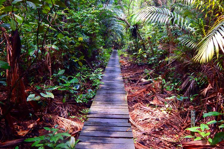 Boardwalk to the mangrove swamp trailhead