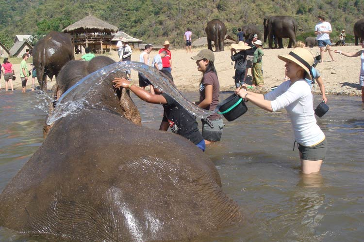 Ecological Volunteering with Elephants in Thailand
