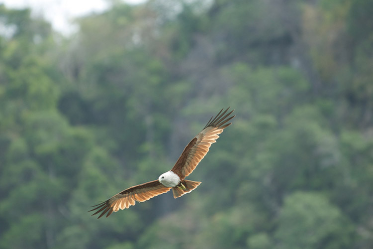 Eagle Sanctuary in Langkawi