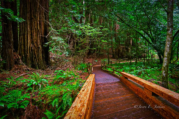 Botanical Ecotourism at its best - Muir Woods National Monument