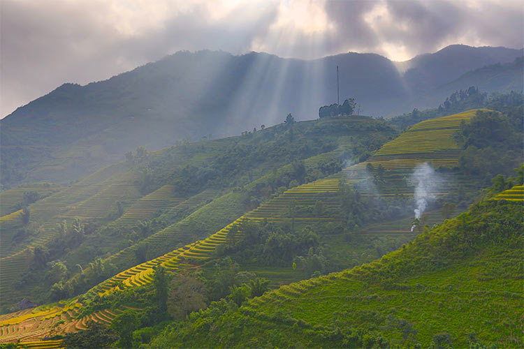 Ray over terrace rice field in Sapa