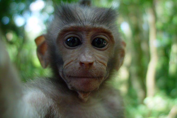 Baby Monkey in the Sacred Monkey Forest